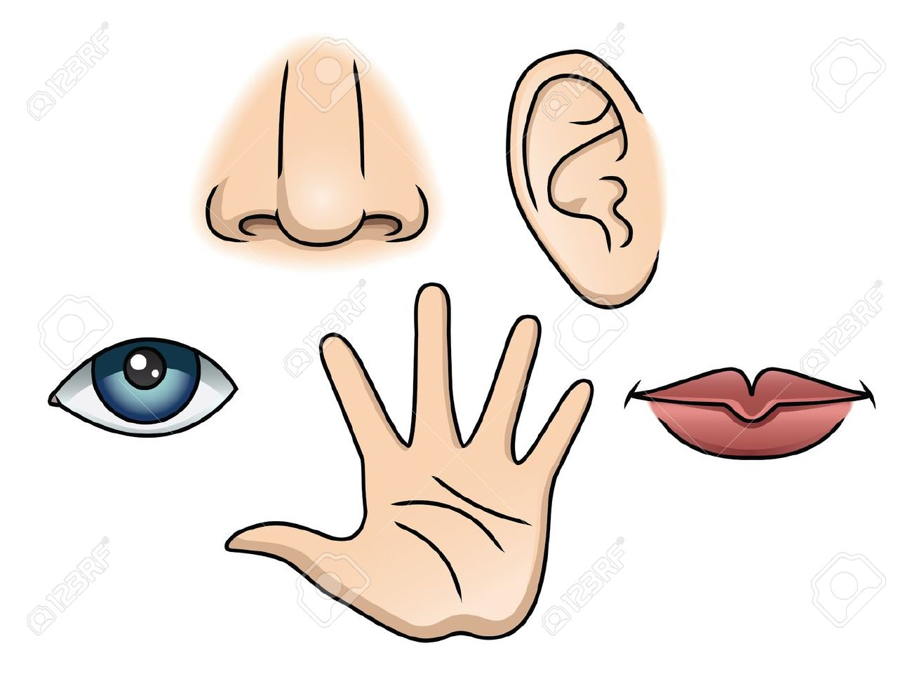 an illustration depicting the 5 senses royalty free cliparts rh 123rf com five senses clipart images five senses clipart
