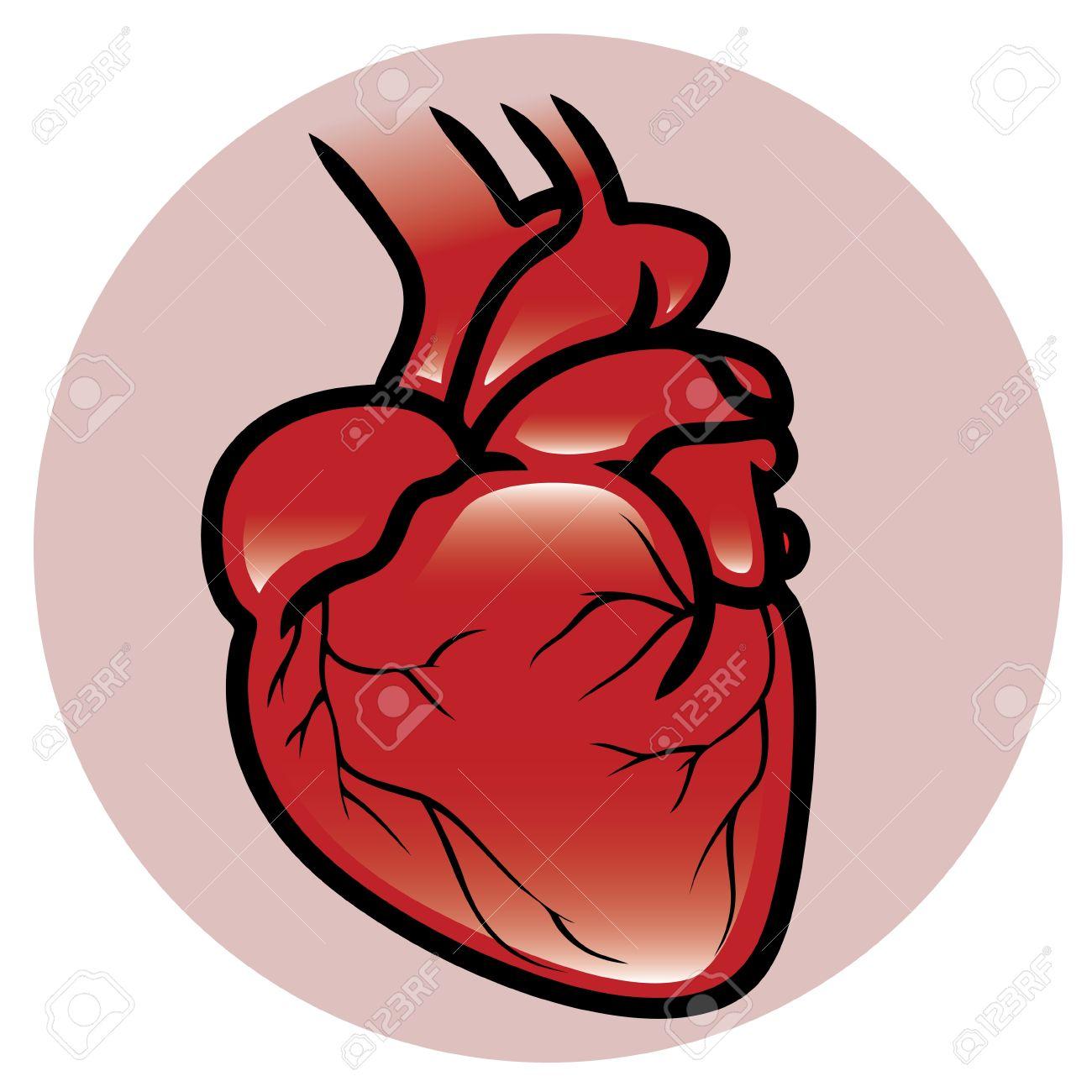 Un Botón O Icono De Un Corazón Humano Ilustraciones Vectoriales