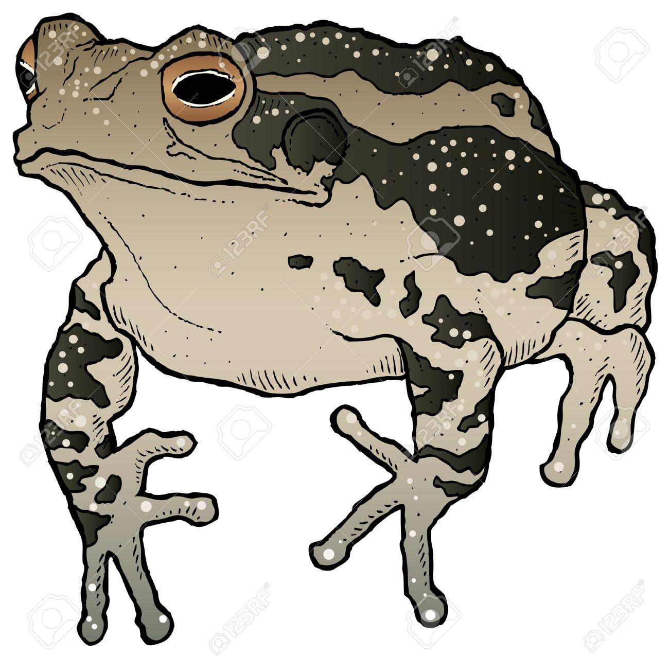 a hand drawn ink vector of a toad royalty free cliparts vectors rh 123rf com