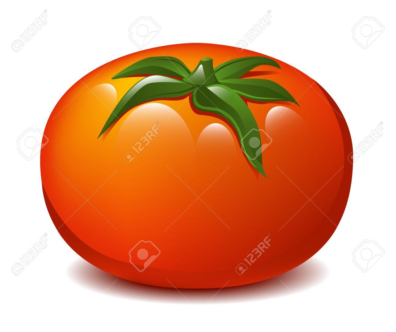 Realistic tomato illustration Stock Vector - 18263877