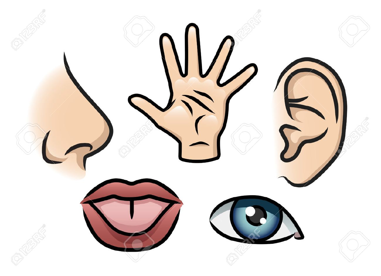a cartoon illustration depicting the 5 senses smell touch hearing rh se 123rf com 5 senses clipart black and white