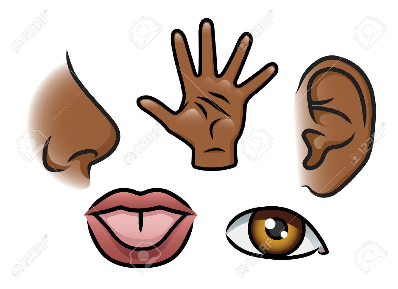 Una Ilustración De Dibujos Animados Que Representa Los 5 Sentidos