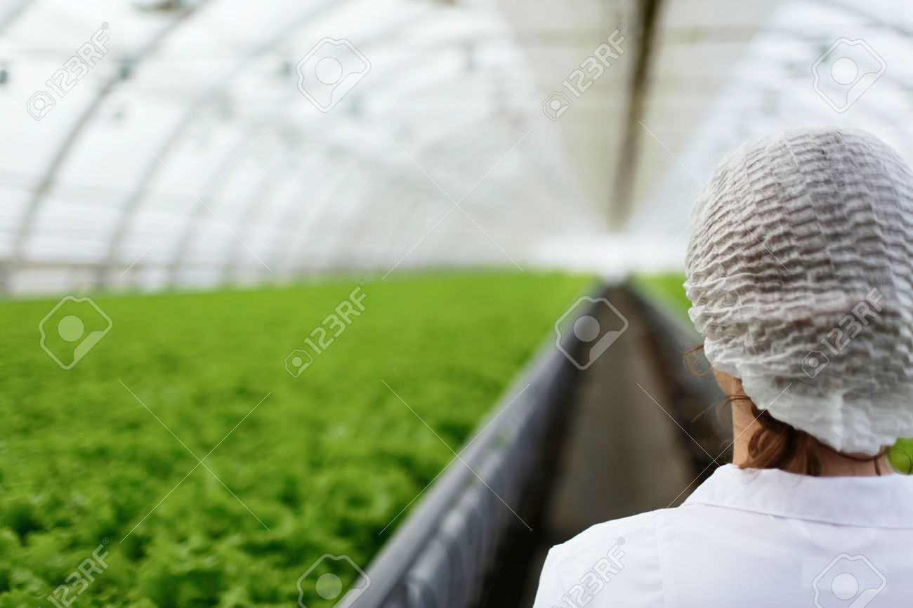 Junior agricultural scientists researching plants and diseases in greenhouse with parsley and green salad. Biotechnology woman engineer examining plant leaf for disease - 52008623