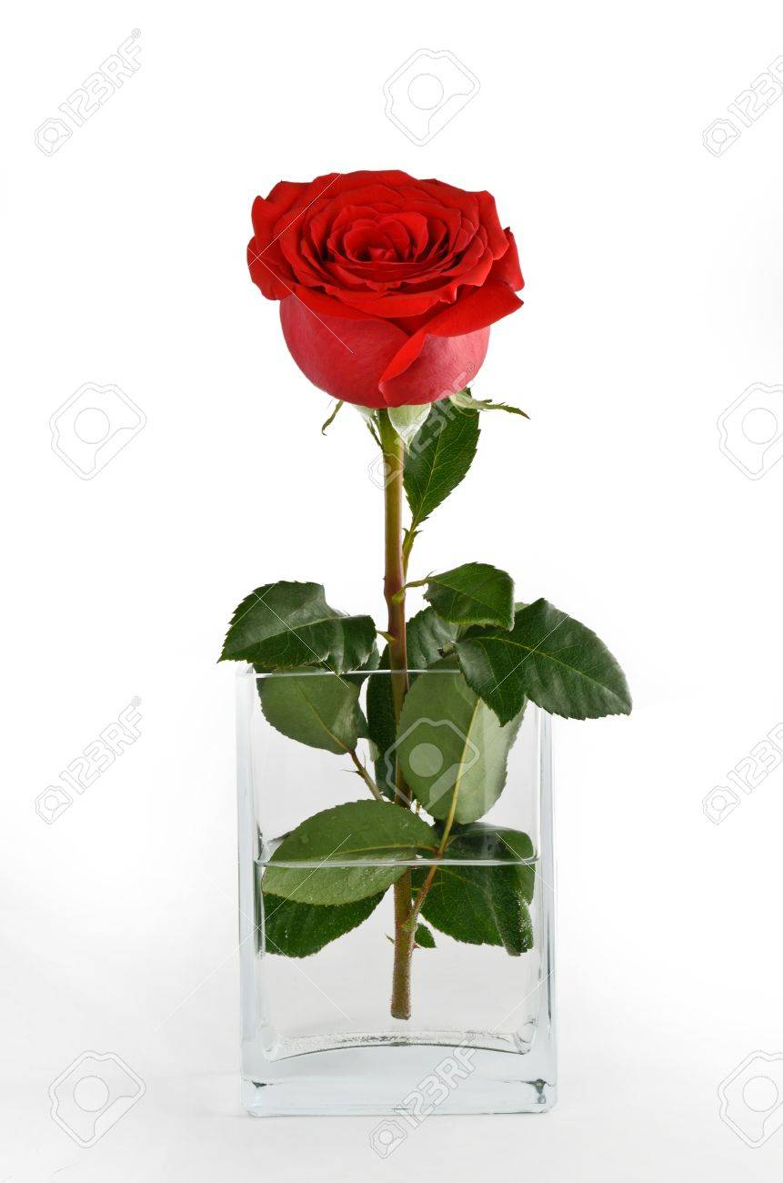 Red rose in a vase of water on a light background stock photo red rose in a vase of water on a light background stock photo 19530822 floridaeventfo Choice Image