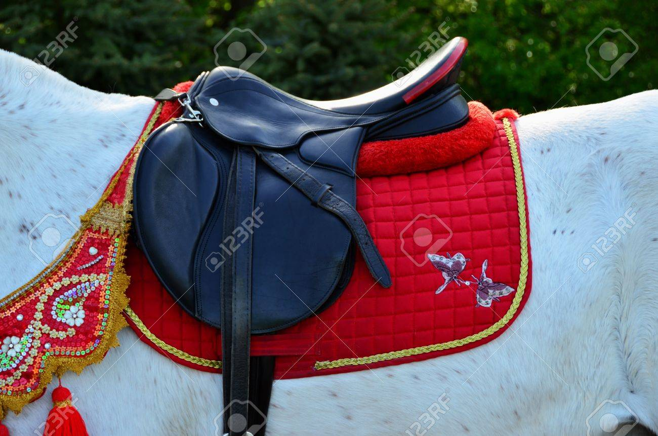 Black Saddle On A White Horse Close Up Stock Photo Picture And Royalty Free Image Image 19531032