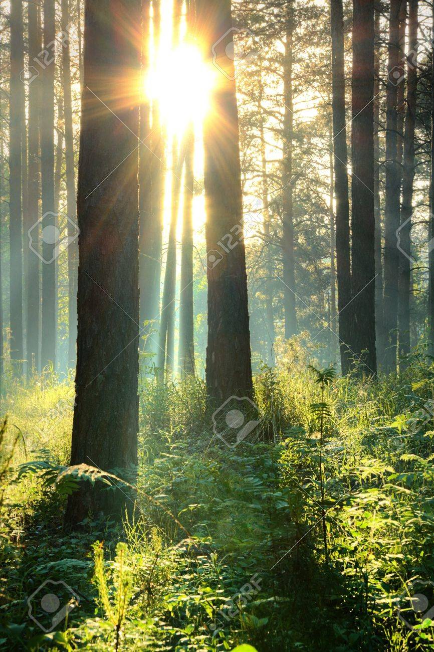 sunset in the woods Stock Photo - 10783276