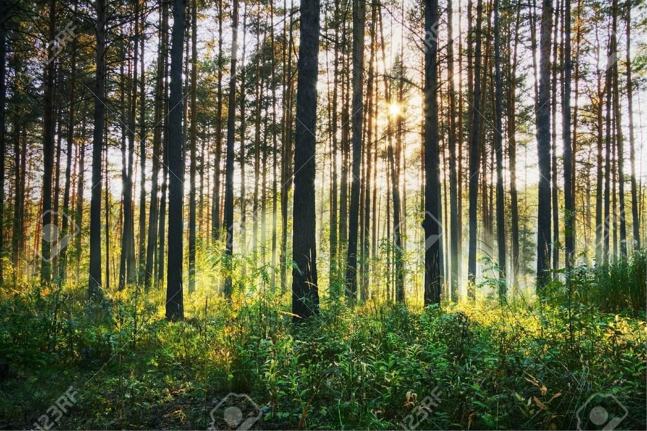 sunset woods Stock Photo - 15568501