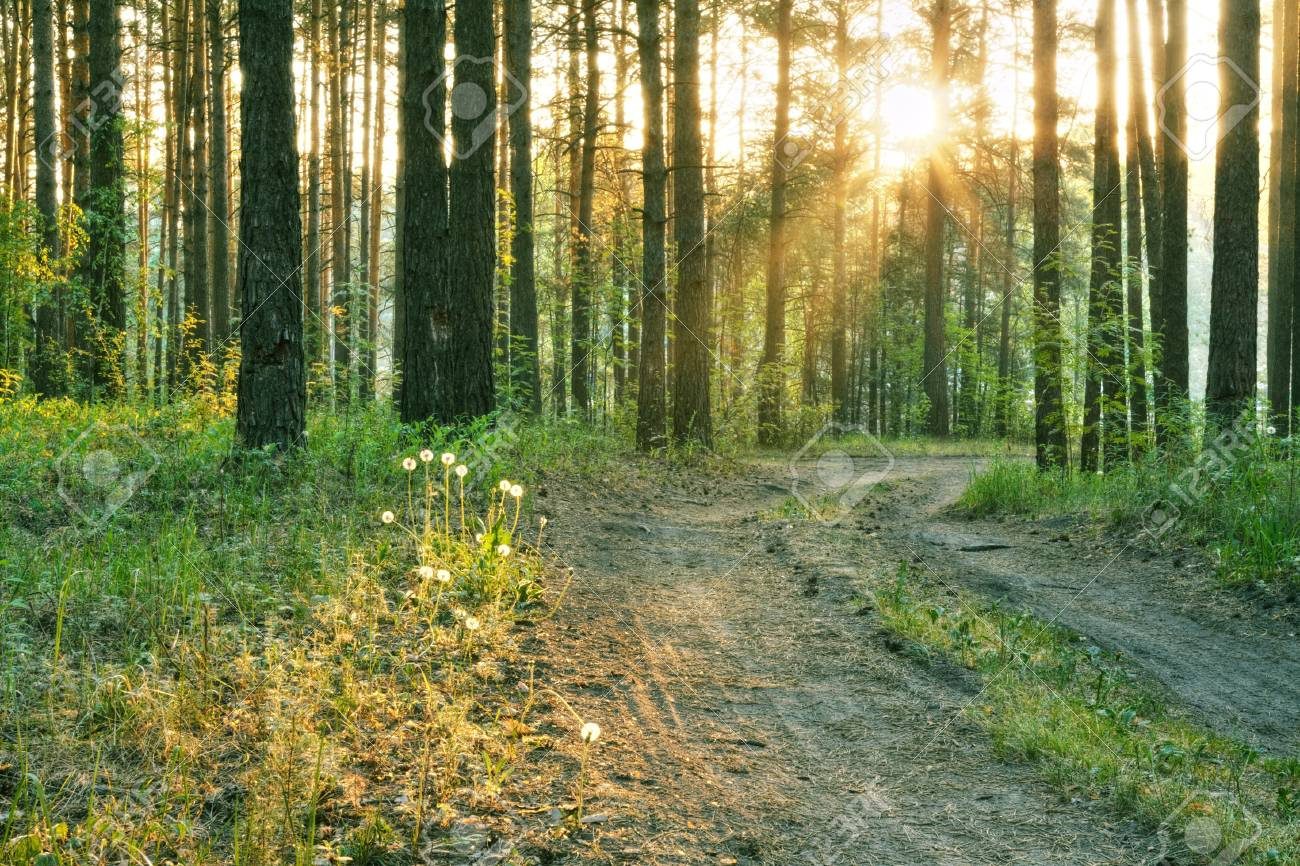beautiful sunset in the woods Stock Photo - 17484532