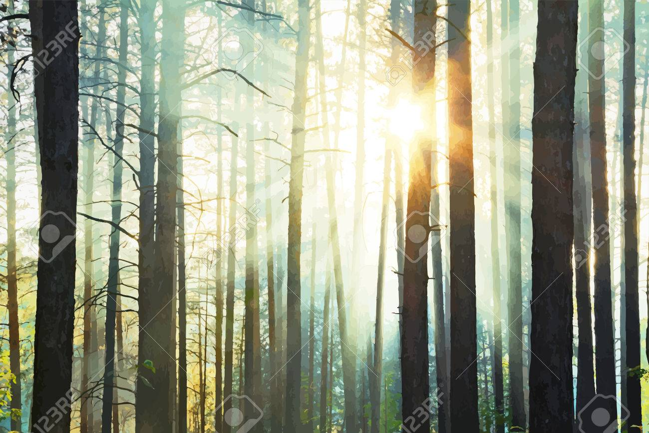sunset in the woods - 51954685