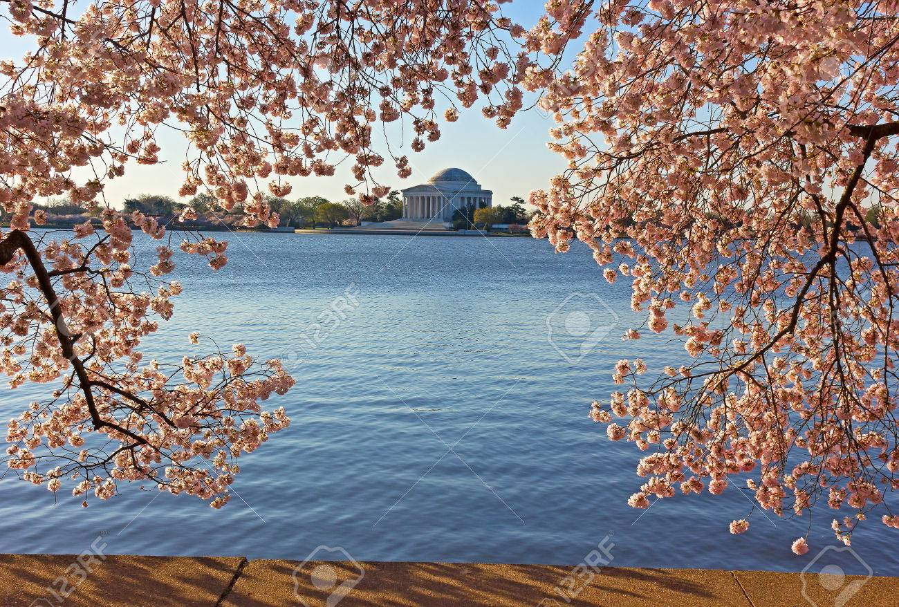 Thomas Jefferson Memorial In Der Kirsche Blumen Am Tidal Basin In ...