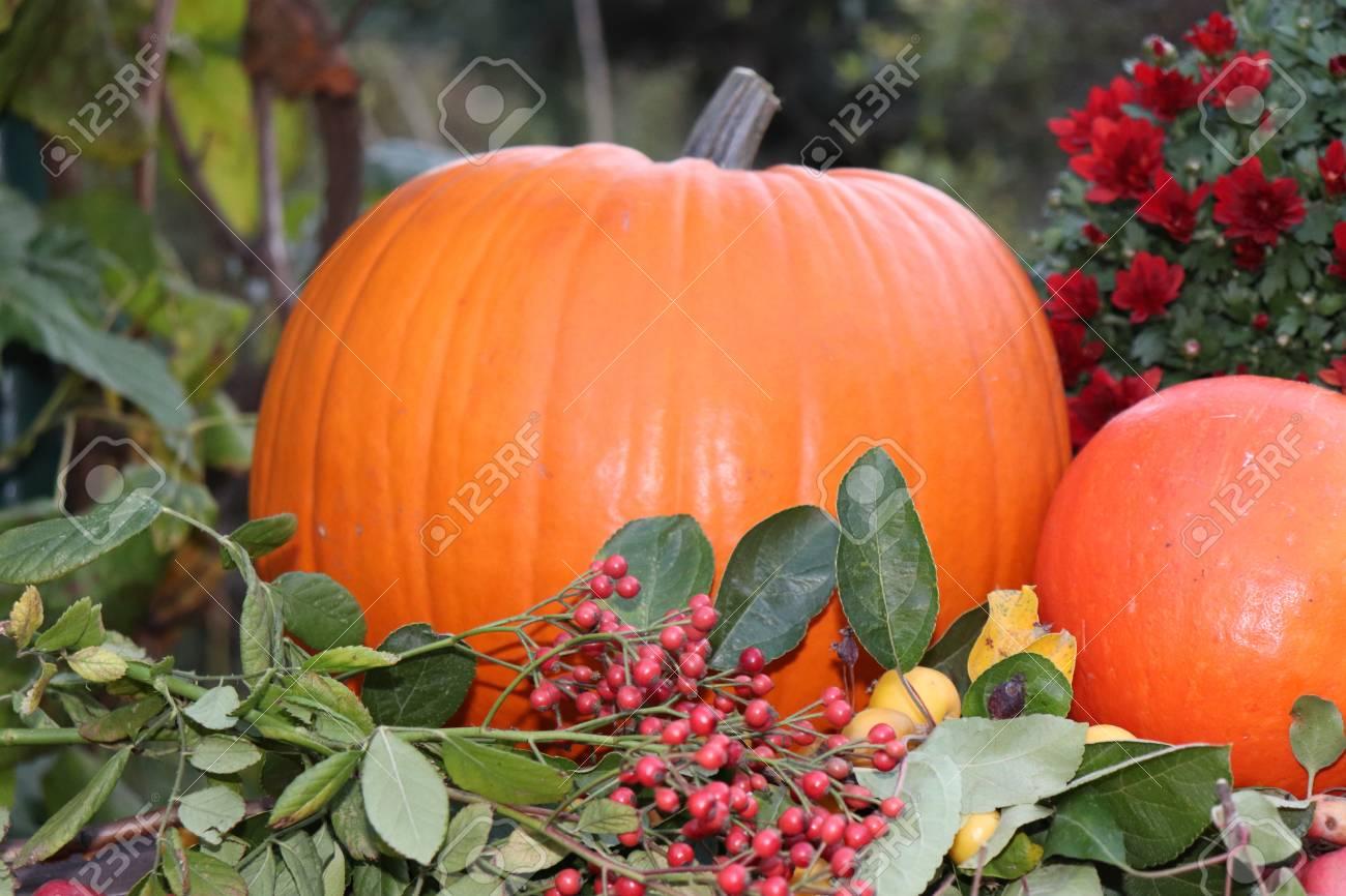 Cute Pumpkins Seasonal Pumpkins Outdoors Background For Fall