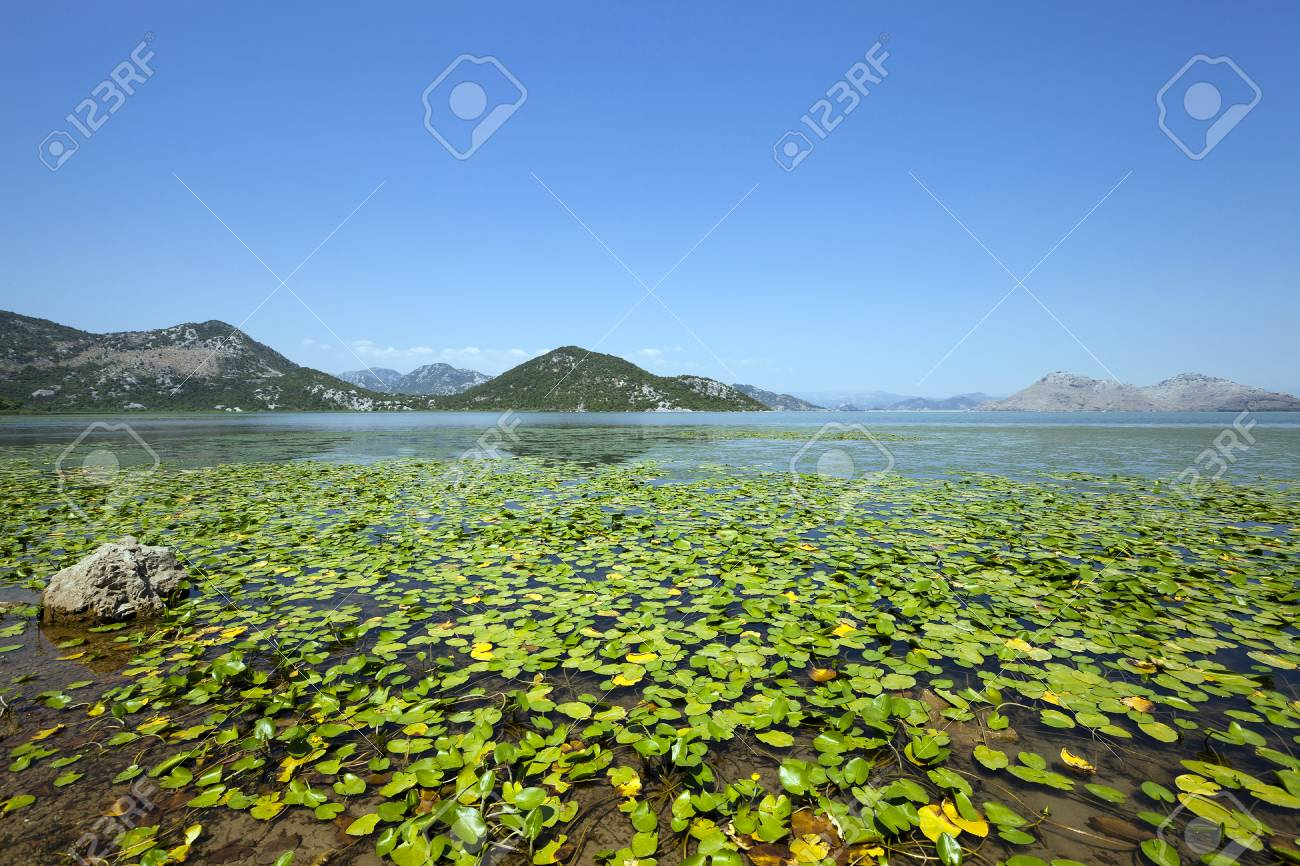 Lake Skadar located in Montenegro in summertime of year - 40778617
