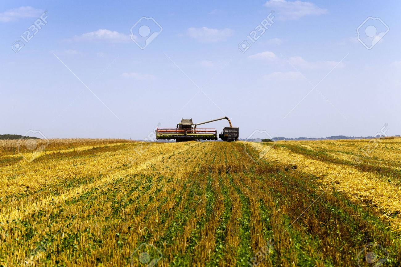 agricultural field which made harvesting of cereals. summer. - 46899891