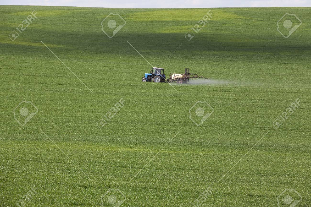 green agricultural field with cereals, which are processed by a tractor - 54266469