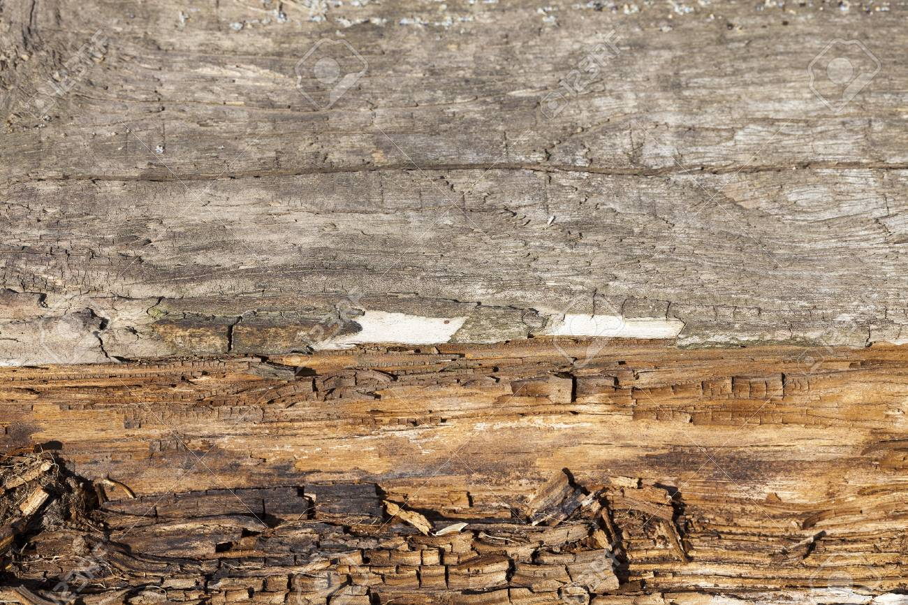 Die Zerstorung Von Holz Vor Feuchtigkeit Lizenzfreie Fotos Bilder