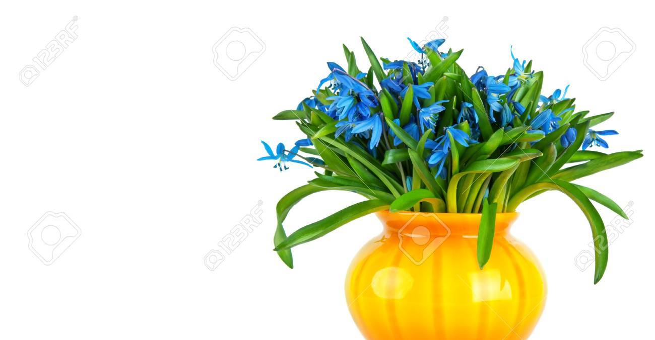blue snowdrops flowers in yellow vase isolated on white Stock Photo - 13334363