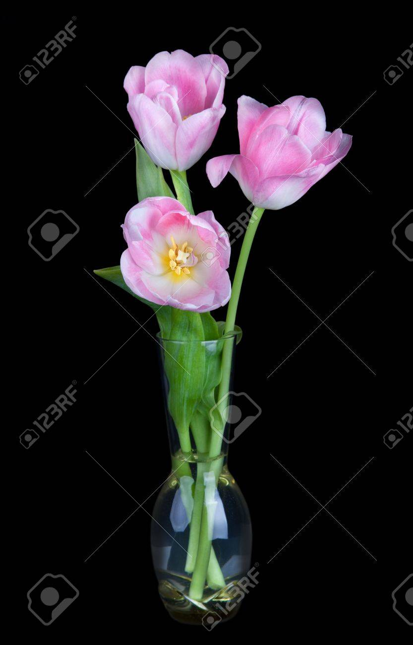 Bouquet of beautiful pink tulips in vase isolated on black background; Stock Photo - 18504237