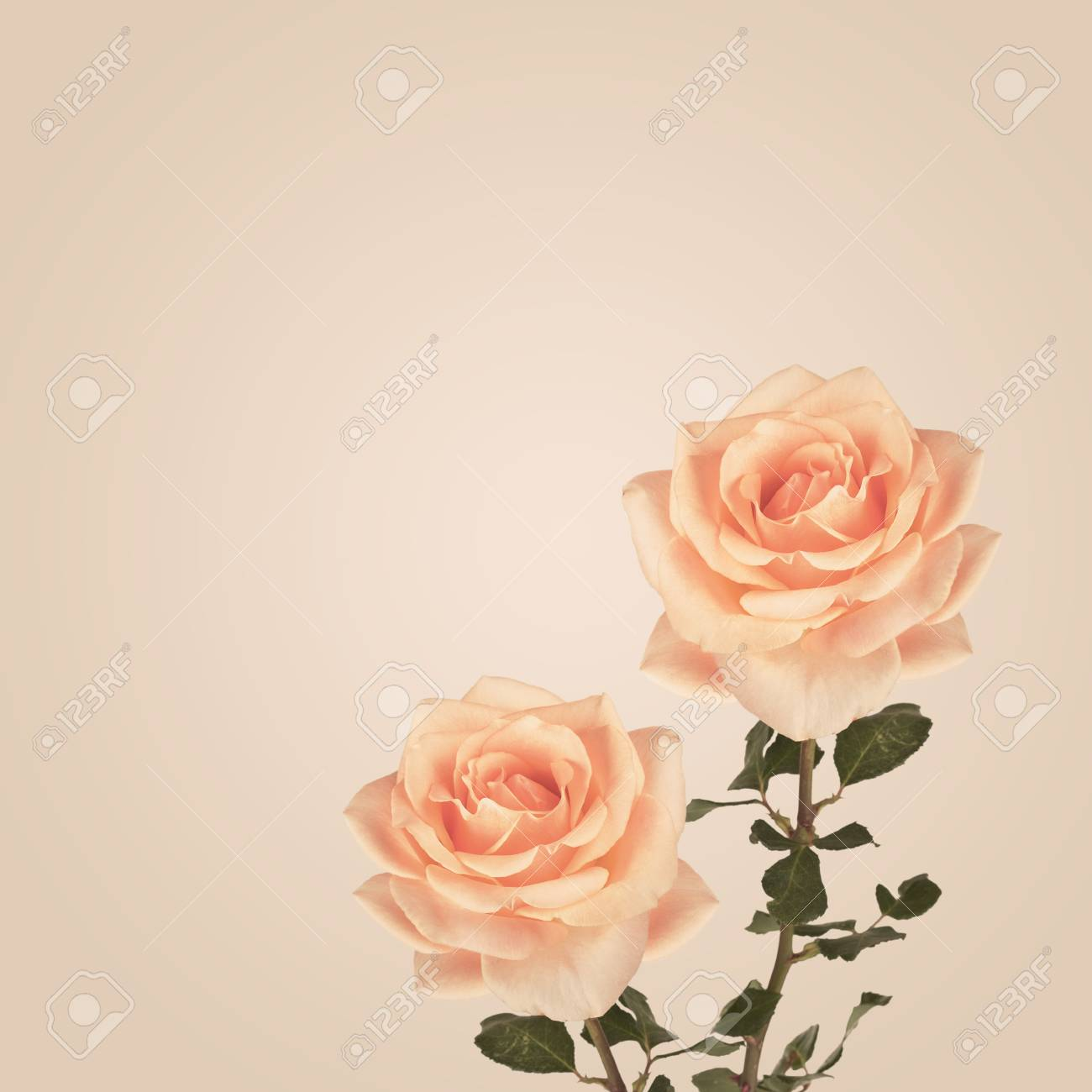 Fiori Vintage.Vintage Background With Roses Flowers Retro Backdrop Stock Photo