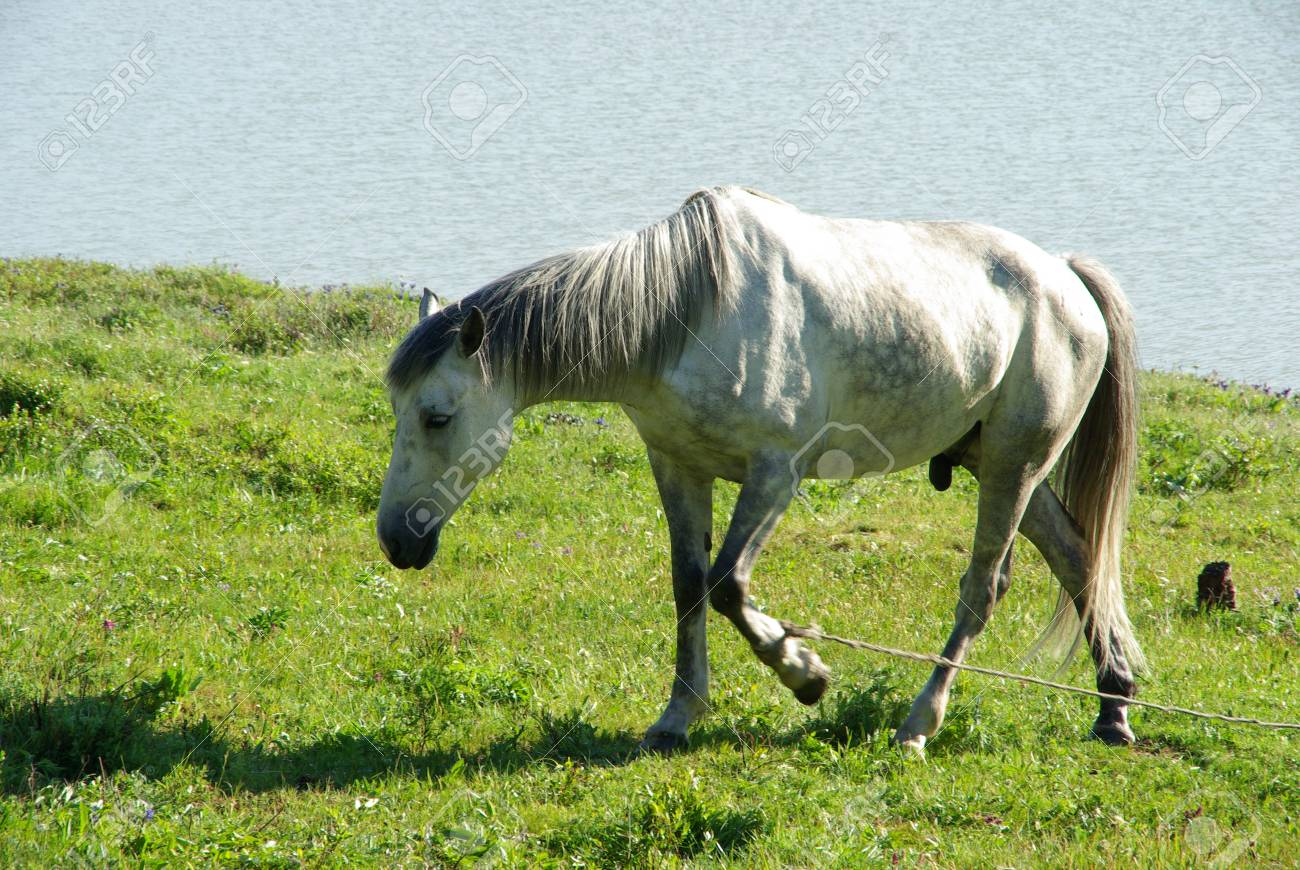 Mountain Horse Plantillas, verde