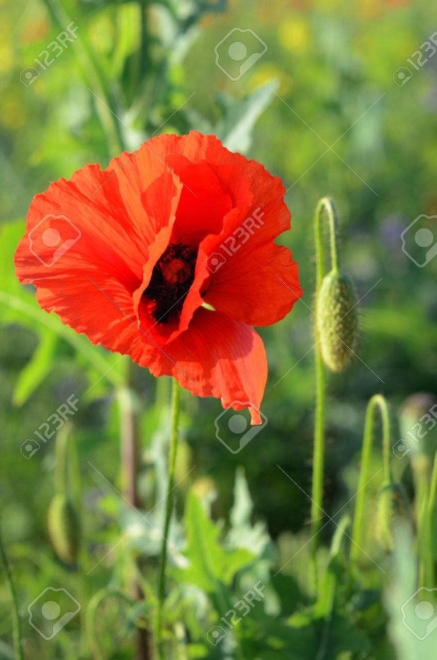 Половой член в зелном цвети