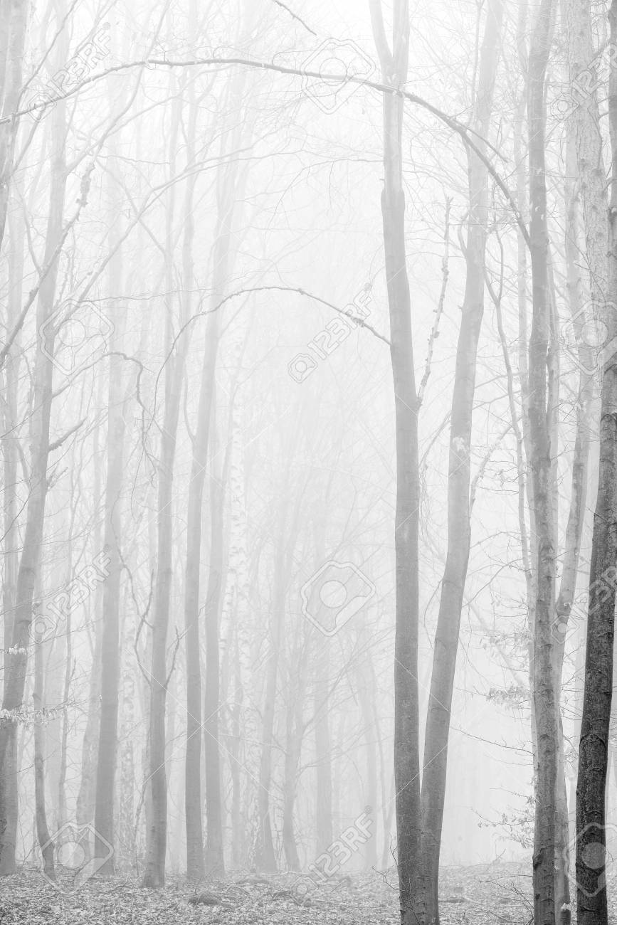 Foggy forest background black and white high key
