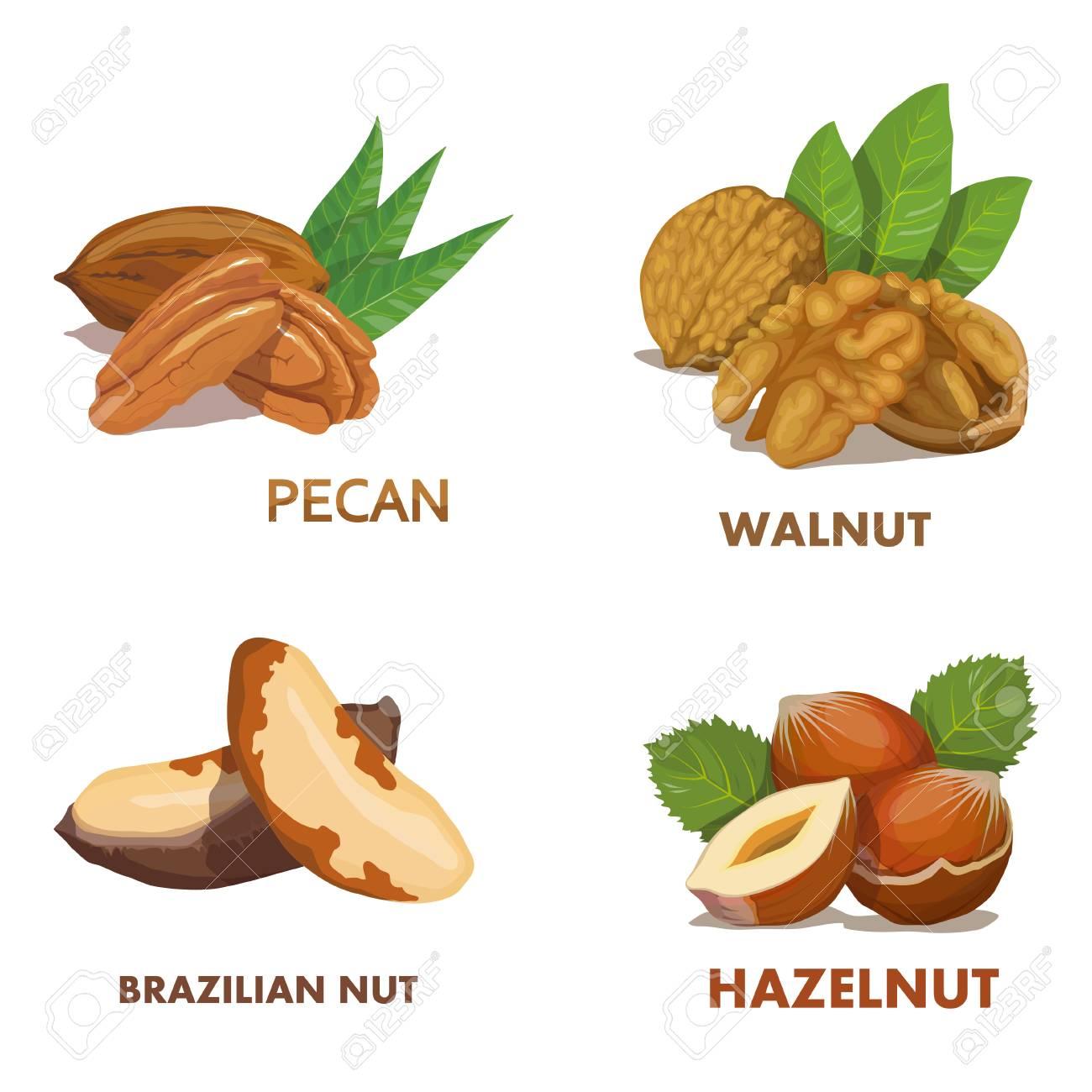 Hazelnut  Brazilian nut  Pecan nut  Walnut  Nut food  Isolated