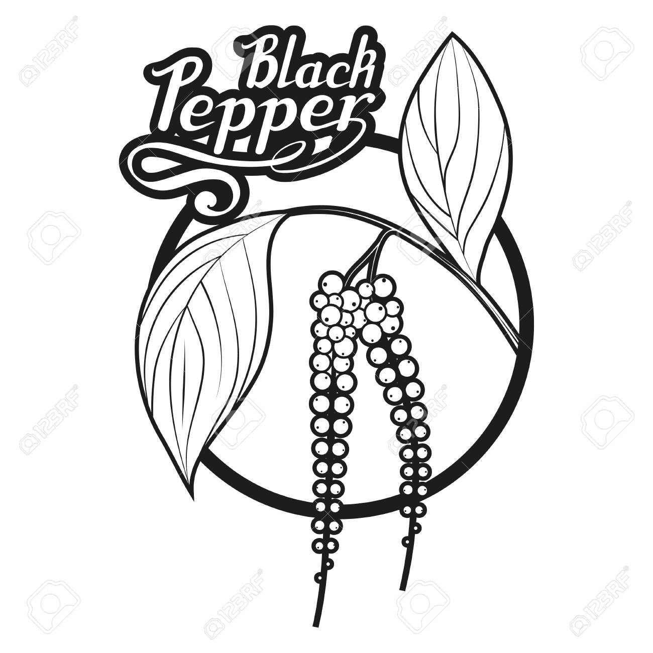 Hand Drawn Black Pepper Spicy Ingredient Black Pepper Logo Royalty Free Cliparts Vectors And Stock Illustration Image 109041527