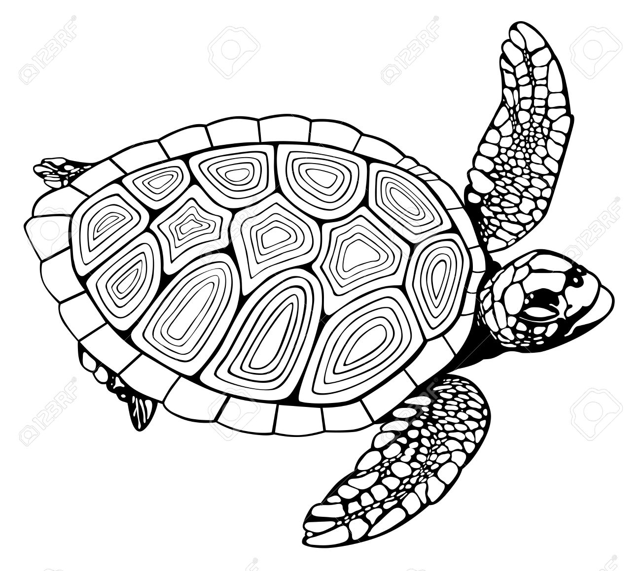 Coloring Book Turtle Royalty Free Cliparts, Vectors, And Stock ...