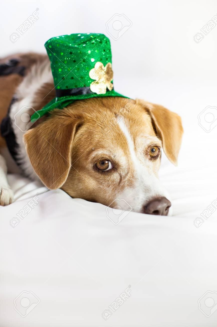 Funny Cute dog wearing a hat Saint Patrick's Day fun Stock Photo - 18025797