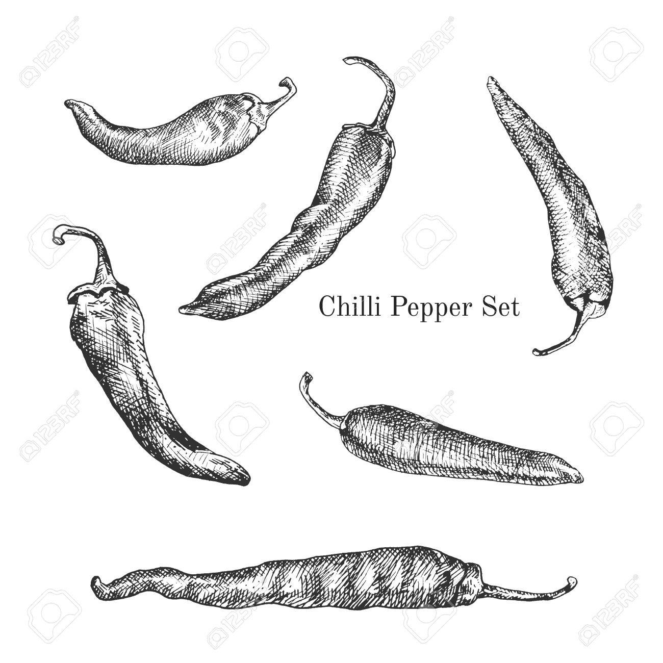 Chilli peppers ink sketches set. Contour outline style - 52314665