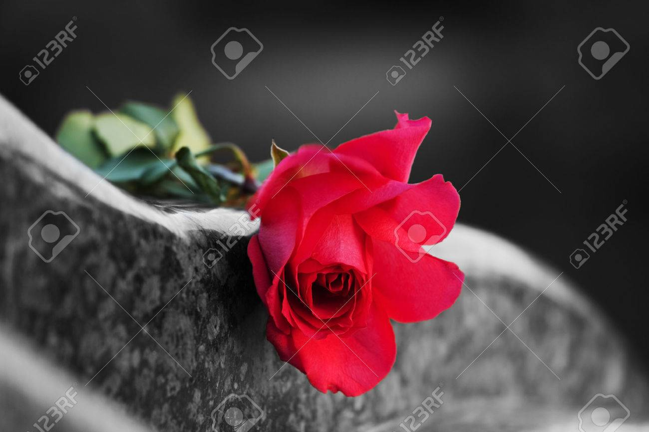 Rose on the tombstone - 25773417