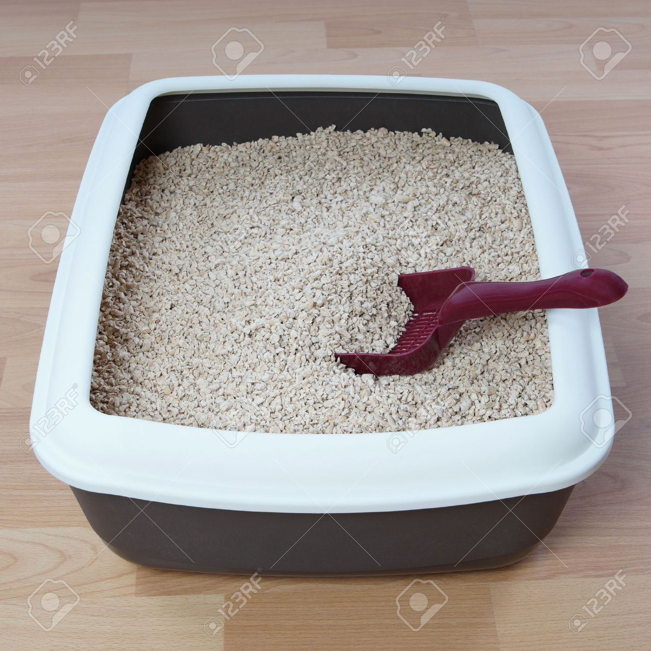 stock photo cat litter box with biodegradable pine wood chips arena kitty litter box