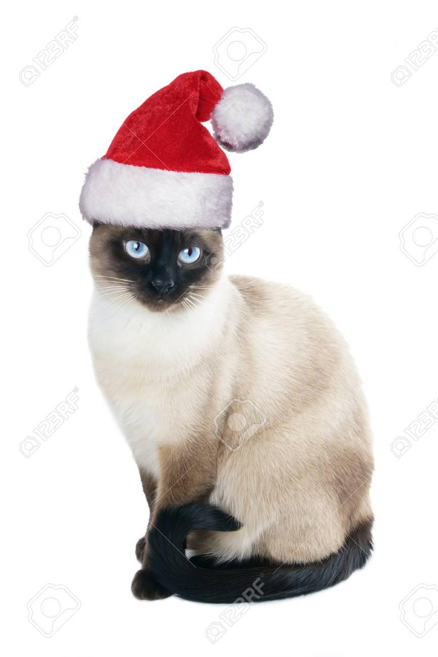 Bonnet De Noel Pour Chat Chat Siamois Portant BonDe Noel Pour Noël, Isolé Sur Blanc