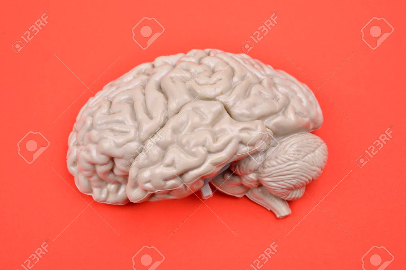 3D Human Brain Model From External On Red Background Stock Photo ...