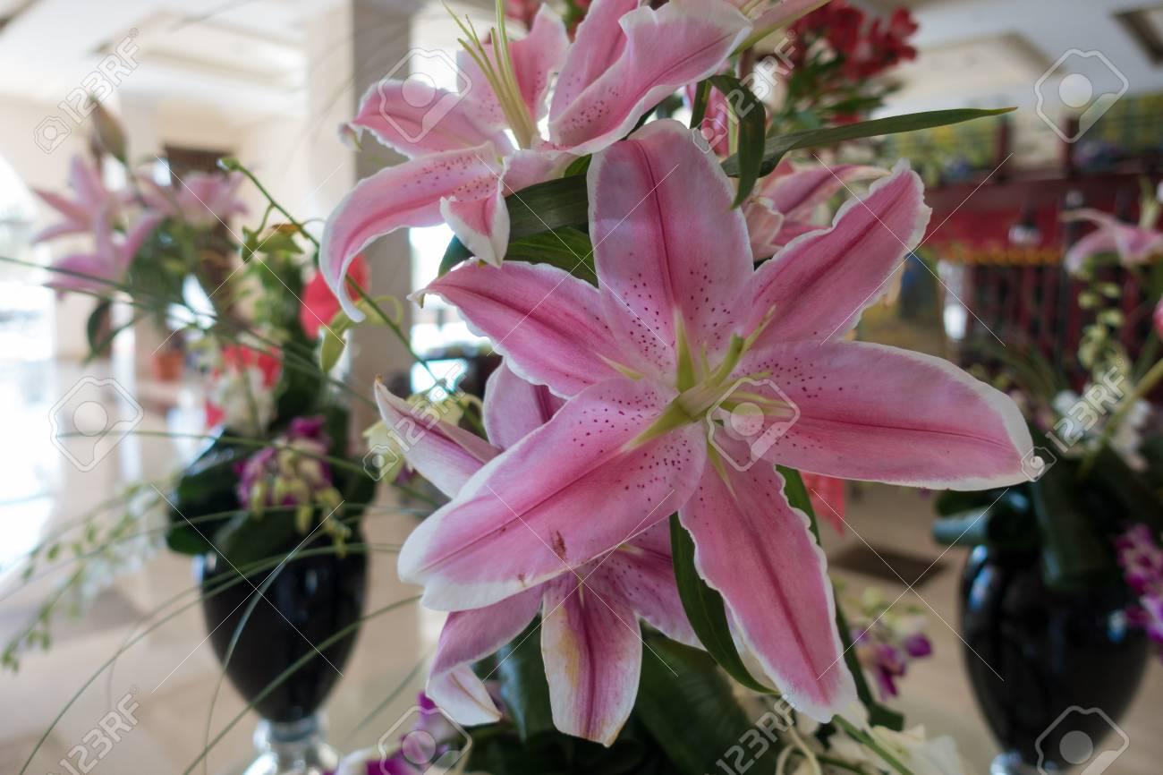 trendy cheap rixos sharm el sheik egipto de septiembre de flores preciosas magnficas with flores preciosas with flores preciosas - Fotos De Flores Preciosas