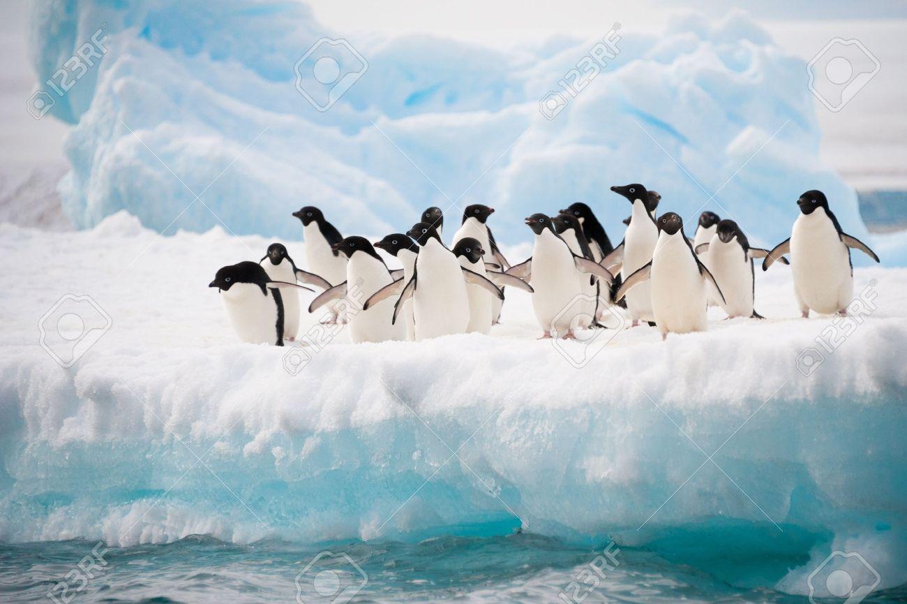 Adelie penguins colony on the iceberg Antarctica - 16630692