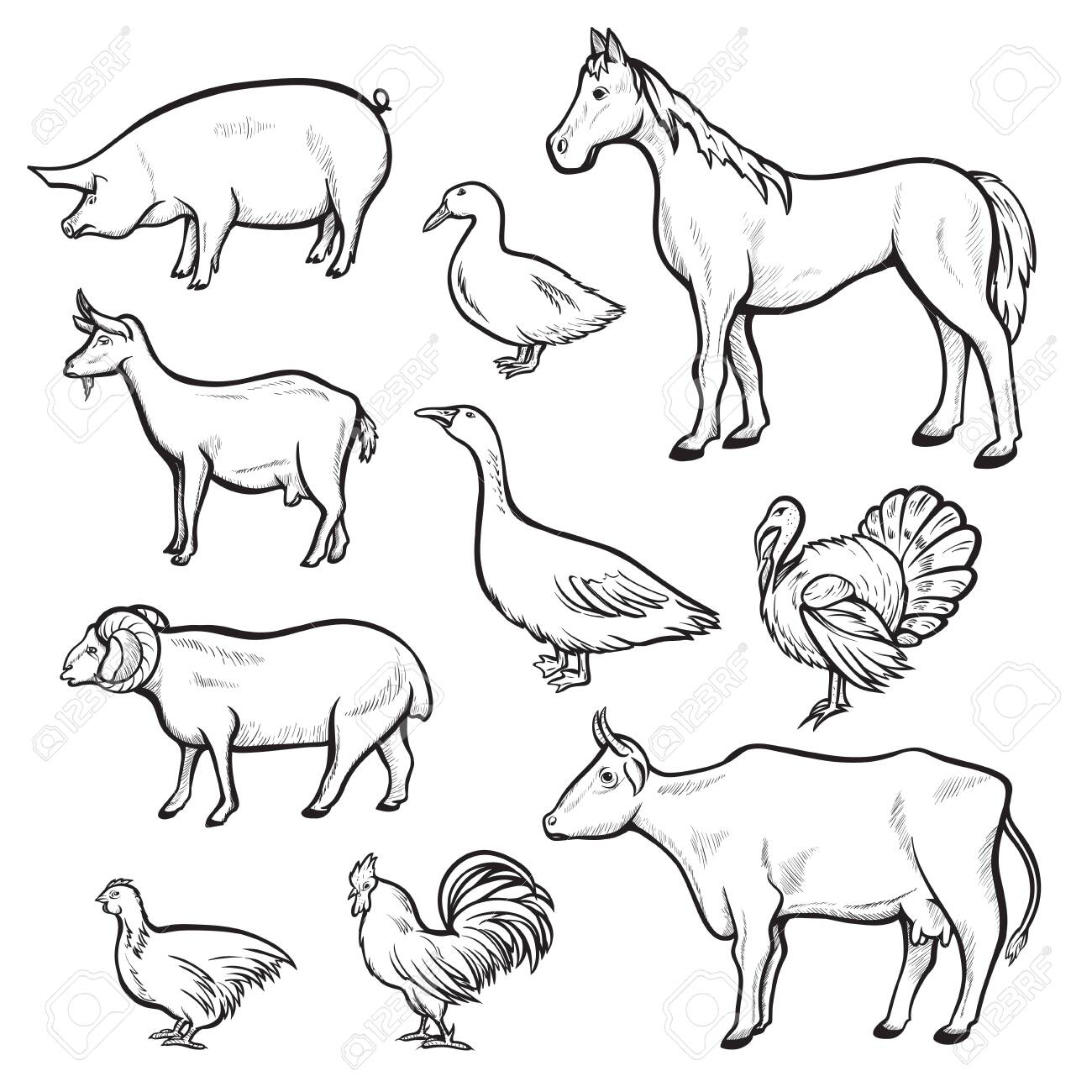 Farm Animal Drawing Set Domestic And Agriculture Symbol Animals Royalty Free Cliparts Vectors And Stock Illustration Image 123012494