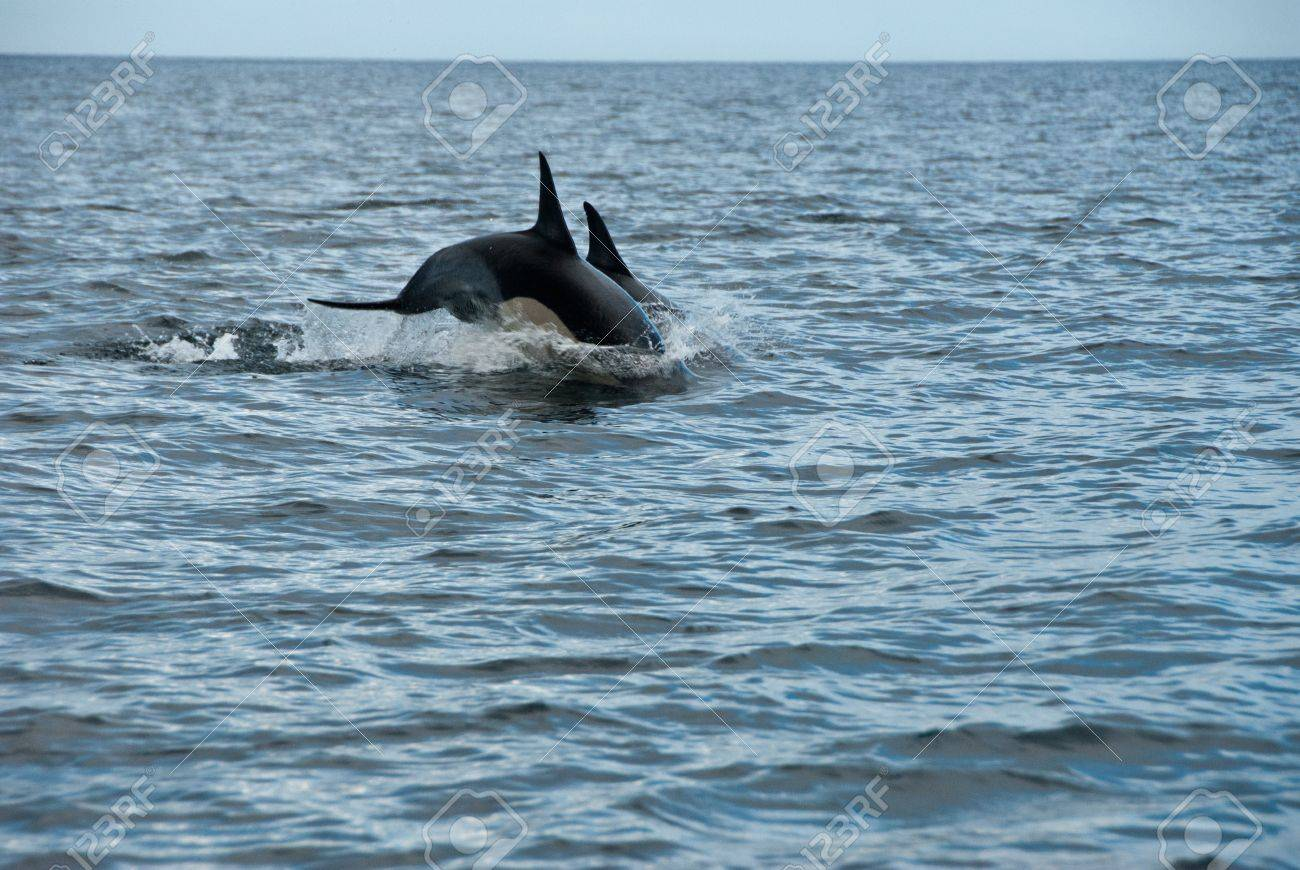 the view of dolphins jumping from out the water cape town south