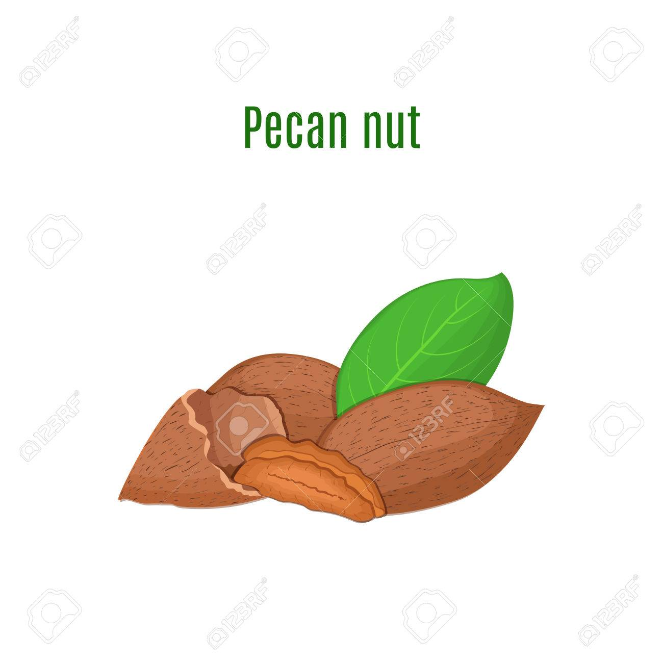 Vector Illustration Of A Pecan Nut A Handful Of Appetizing Pecan