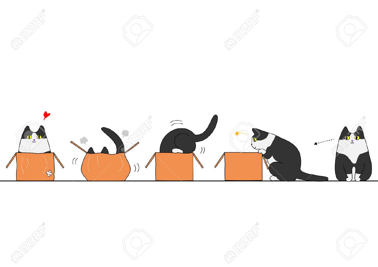 Cat going into a box - 50884735