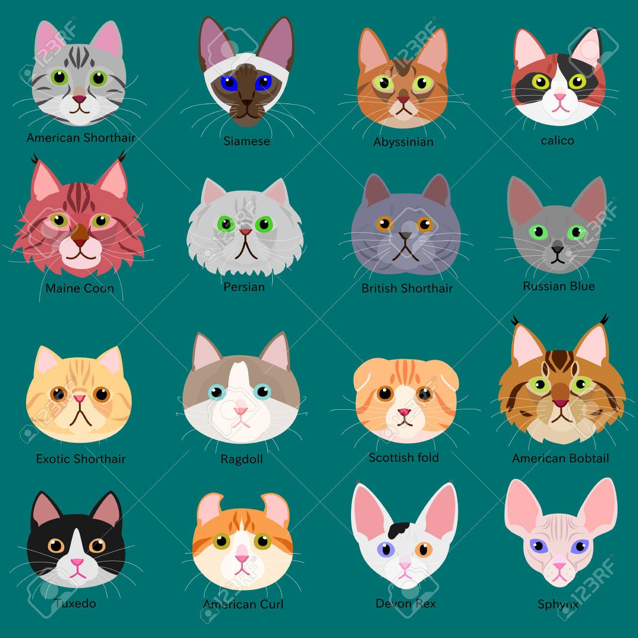 cats face set with breeds name - 65002738