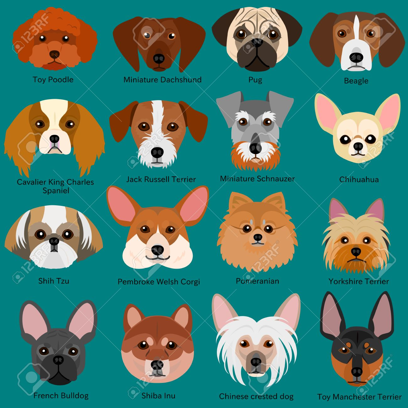 Small Dog Faces Set With Breeds Name Royalty Free Cliparts Vectors And Stock Illustration Image 68424496