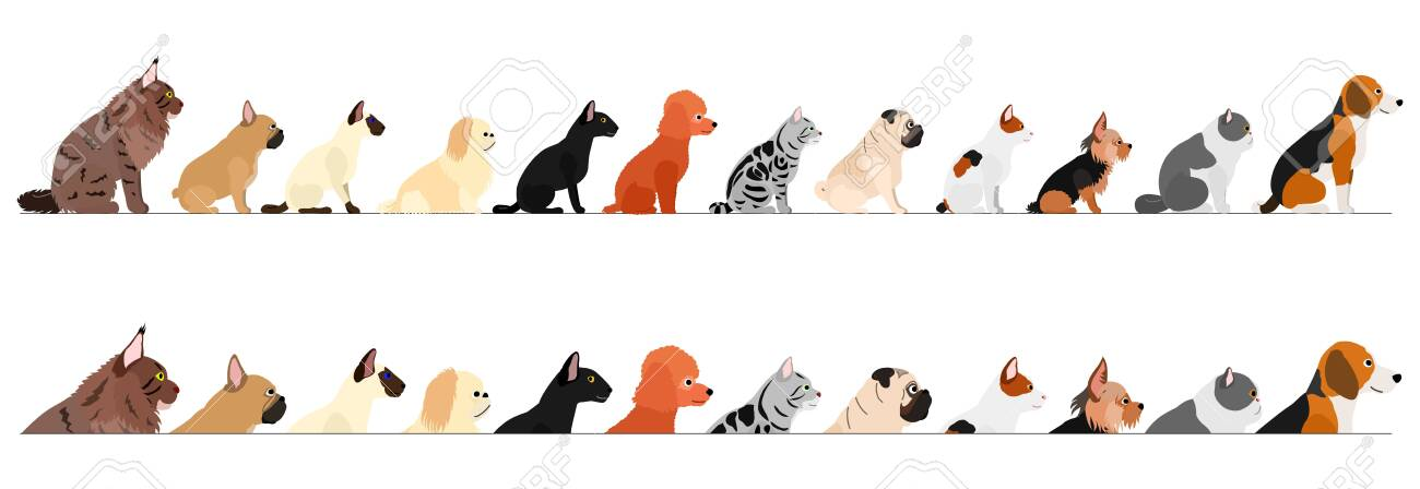 set of side view small dogs and cats border - 134823785