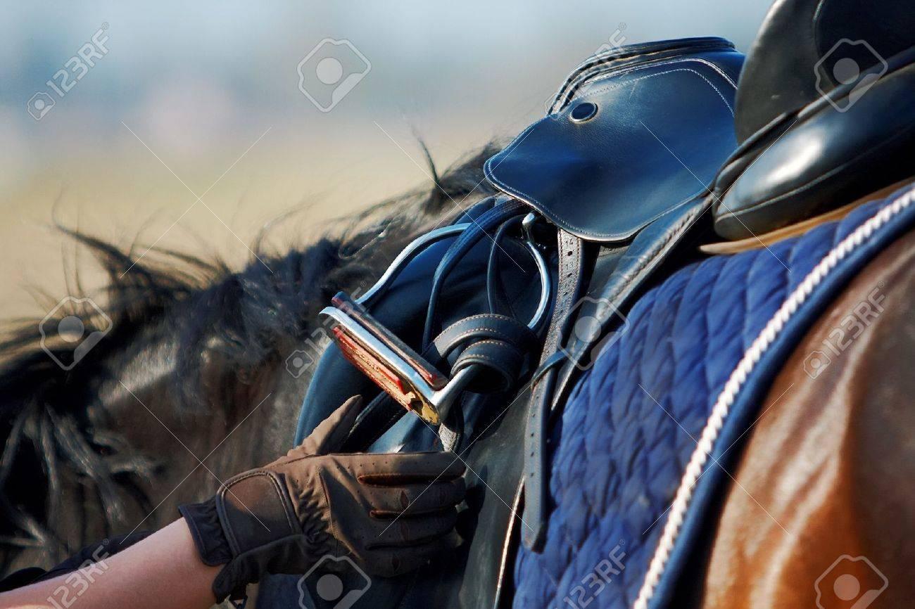 Saddle with stirrups on a back of a horse Standard-Bild - 14043270