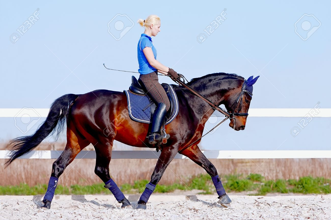 The horsewoman on a brown horse goes at a trot Standard-Bild - 14070609