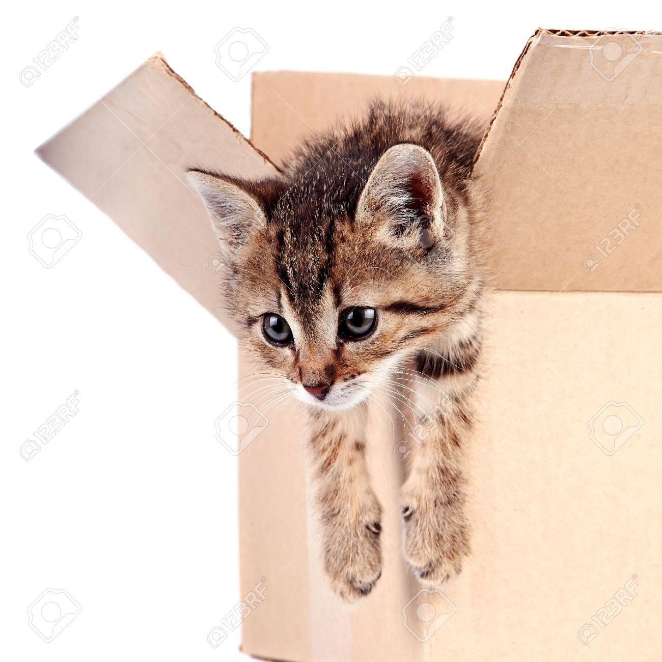 Kitten in a box on a white background Standard-Bild - 16693767