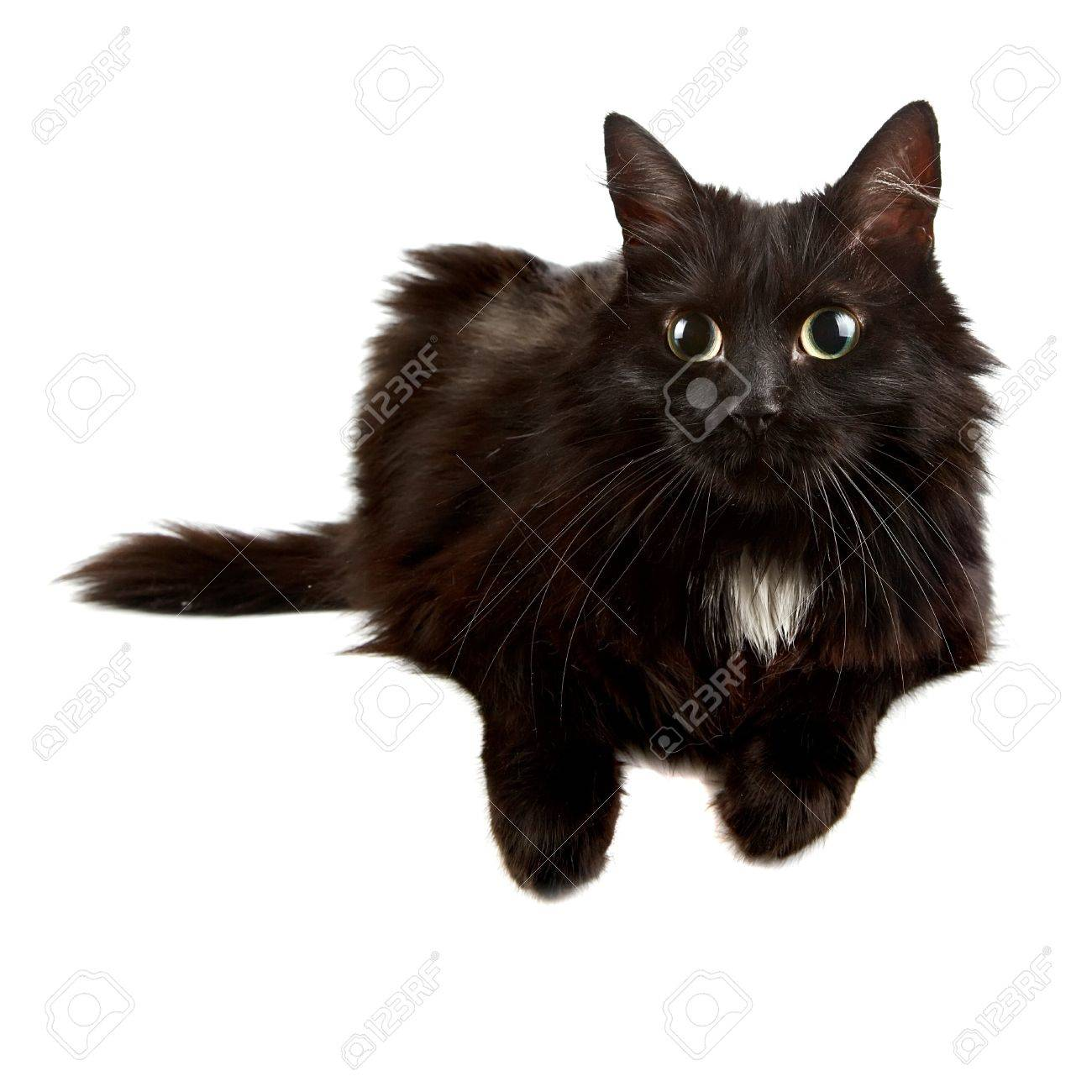Black cat on a white background Stock Photo - 16712014