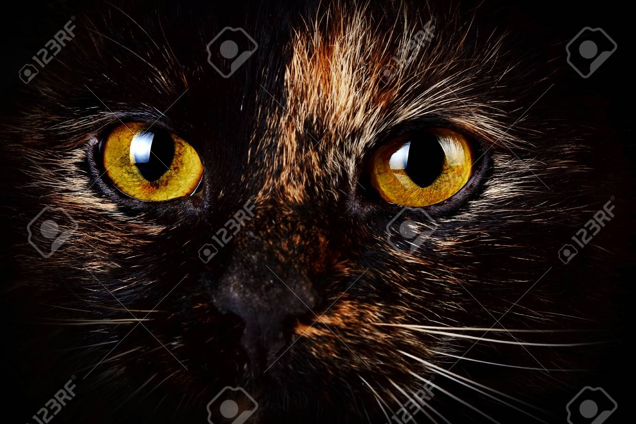 Schöne gelbe Katzenaugen