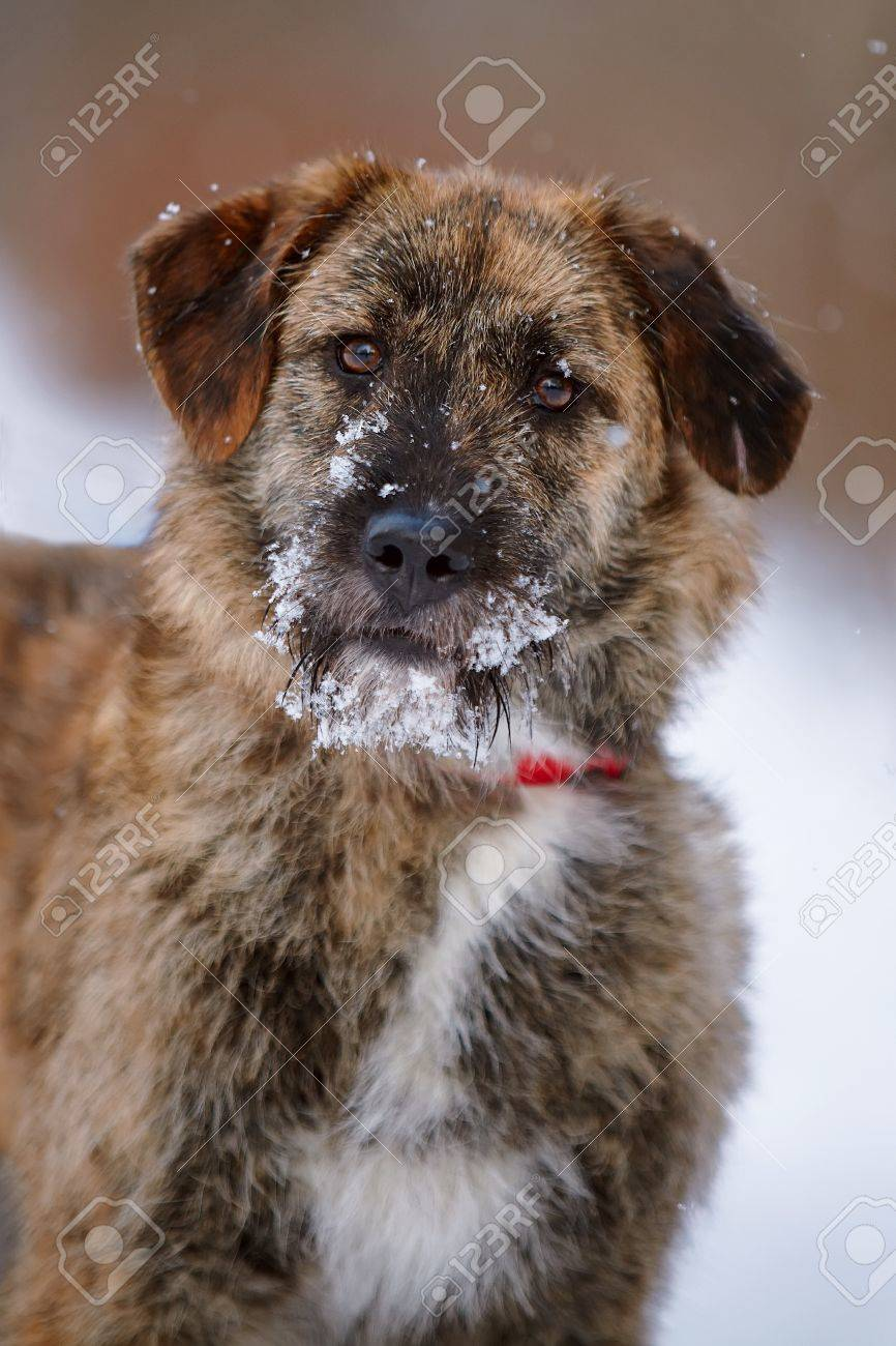 Portrait of a shaggy mongrel. Dog on snow. Stock Photo - 17842563