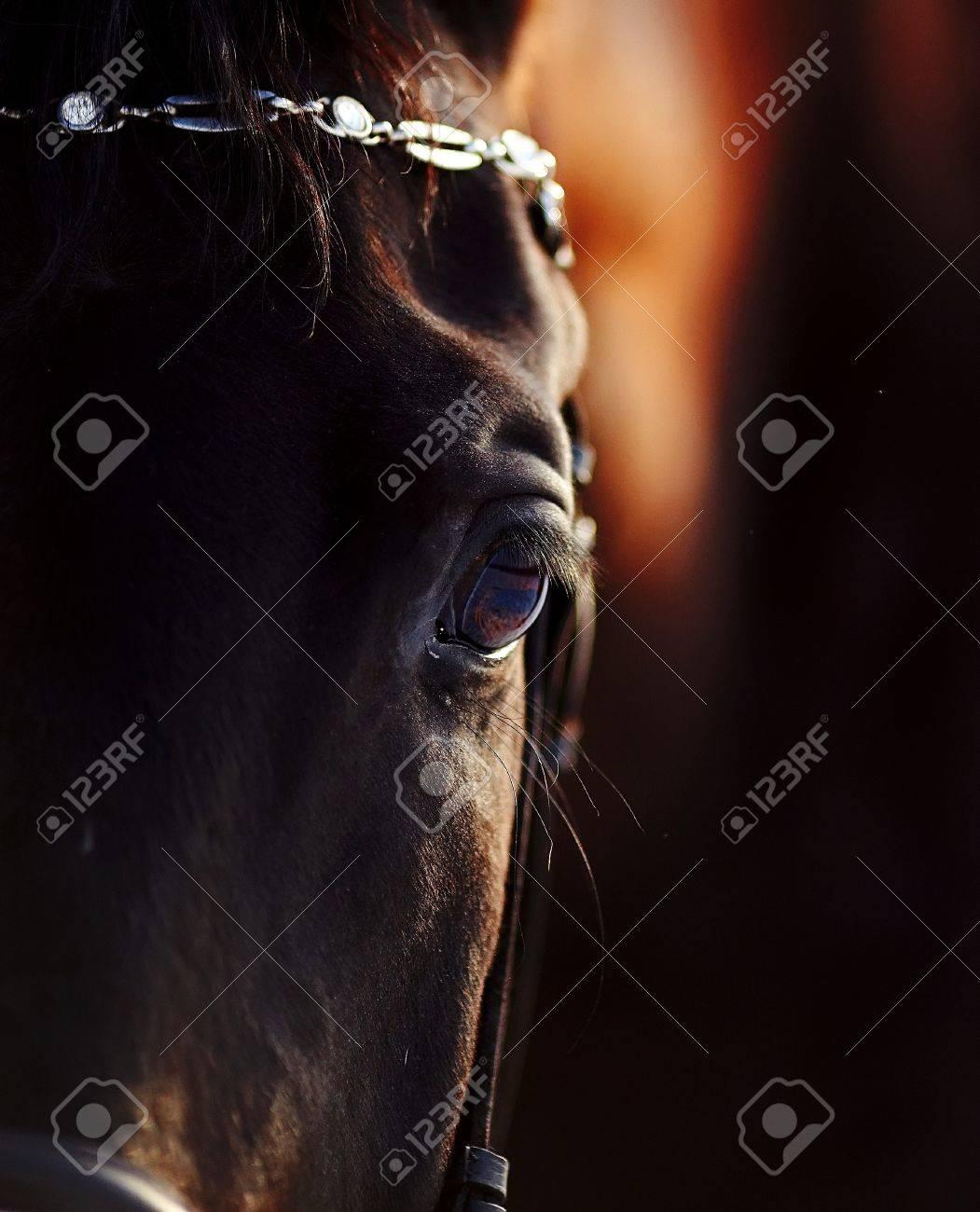 Eye of a horse. Portrait of a horse. Sports horse. Thoroughbred stallion. Muzzle of a horse. Saddle horse. Stock Photo - 17968032
